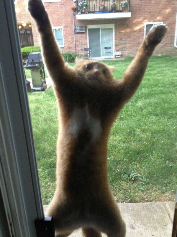 חתול קופץ על רשת