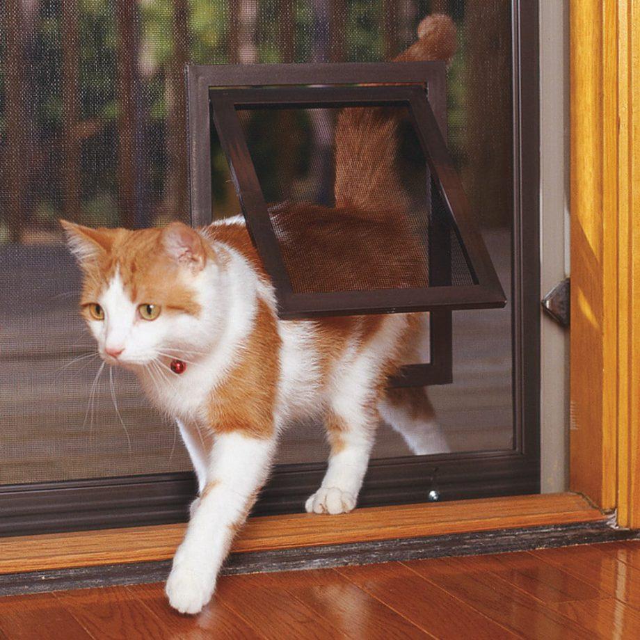 דלת מעבר לחתולים