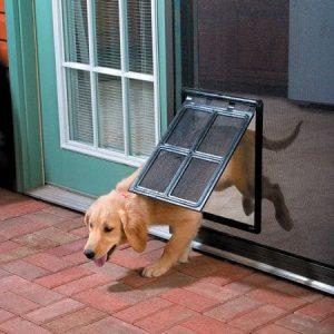 דלת מעבר לכלבים  מותקנת על רשת נגד יתושים